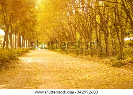 empty road in autumn