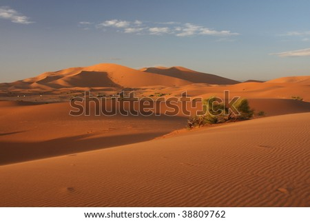 Empty spaces of sand desert in Sahara