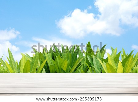 Empty white table over tree leaves and sky background
