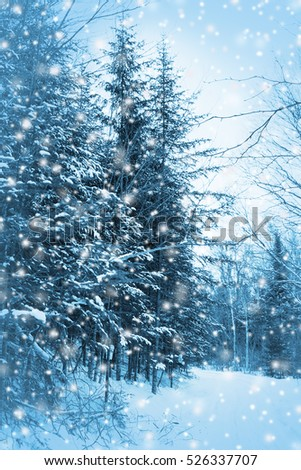 Enchanted blue forest background or card