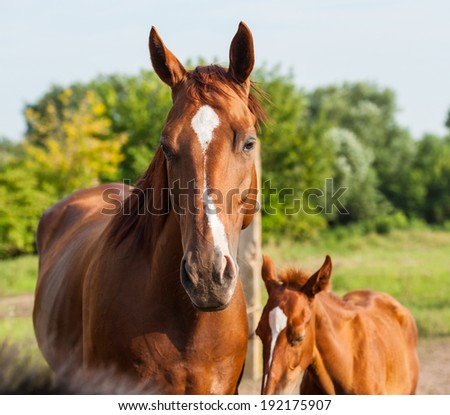 English breed horse portrait outdoors in summer, closeup