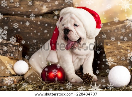English bulldog and hat of Santa Claus