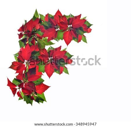 Christmas poinsettia frame made traditional christmas for Poinsettia christmas tree frame