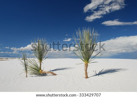 Even in the harshest environments life finds a way to survive. White Sands National Monument in New Mexico.