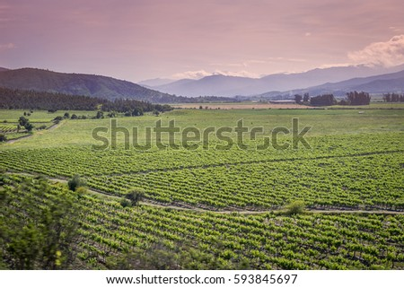 evening light of vineyard