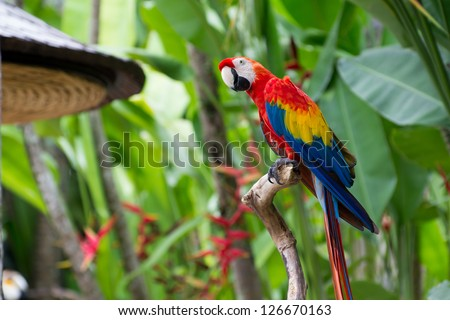 Exotic big parrot in jungle