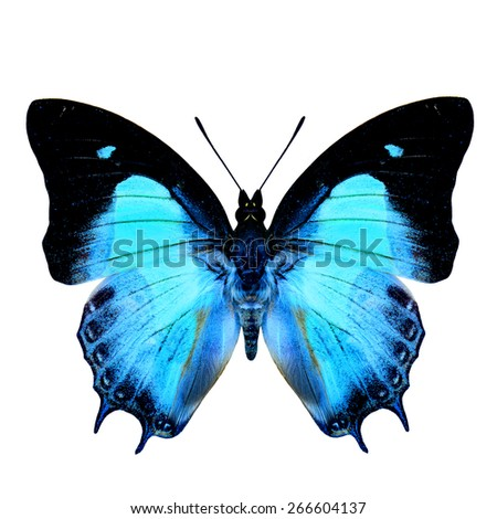 Exotic Pale Blue Butterfly in fancy color isolated on white background