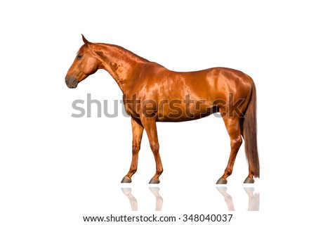 Exterior beautiful red horse isolated on white background