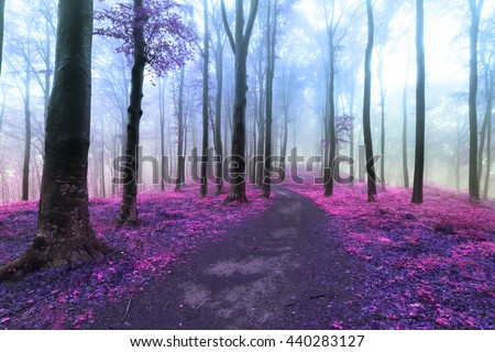 Fairy tale atmosphere into the forest