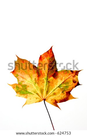 fall colored leaf