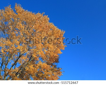 Fall Colors - Autumn trees in deep fall colors with copy space.