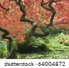 Fall in a japanese garden - stock photo
