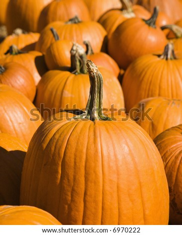 Fall pumpkins at outdoor market.