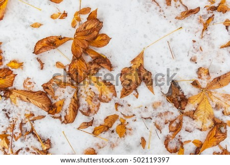 Fallen foliage on the snowy ground at fall winter seson cold beautiful day