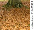 Fallen leaves around the base of a tree trunk. - stock photo