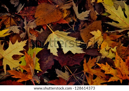 Fallen leaves on the bottom of the lake.