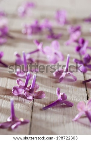 fallen lilac blossoms on white garden table