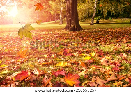 falling leaves of autumn tree and sunshine