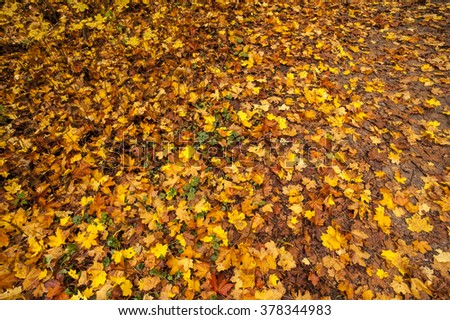 falling orange leaves