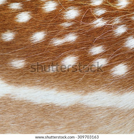 fallow deer real pelt, colorful animal fur  texture