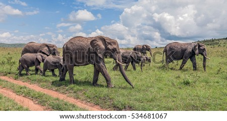Family of african elephant on a sunny day  - Kenya, Eastern Africa