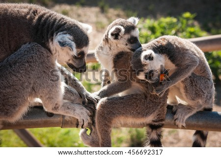 Family of cute lemurs sitting on a handrail