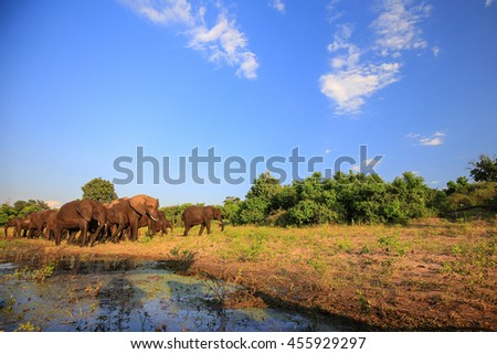 Family of elephants moving along river to drink water, Africa