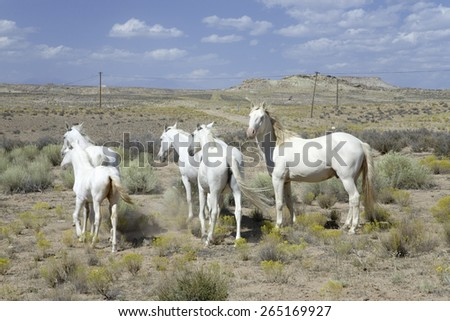 Family of five white horses in desert area on Route 162 between Montezuma Creek and Aneth, Utah