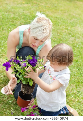 Family plant purple flowers in a flowerpot