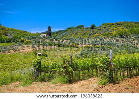 Famous Tuscany vineyards. Italy