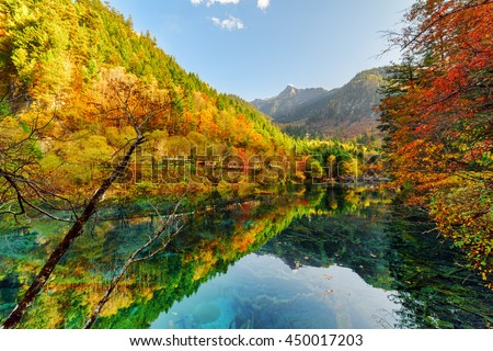 Fantastic view of fall woods reflected in the Five Flower Lake (Multicolored Lake), Jiuzhaigou nature reserve (Jiuzhai Valley National Park), China. Submerged tree trunks are visible in crystal water.