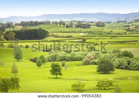 Farm Pasture in New Zealand with paddocks and trees