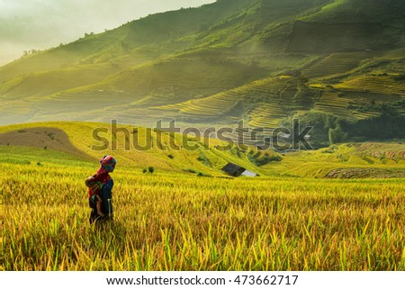 Farmer and Rice terrace on during sunrise  ,Vietnam