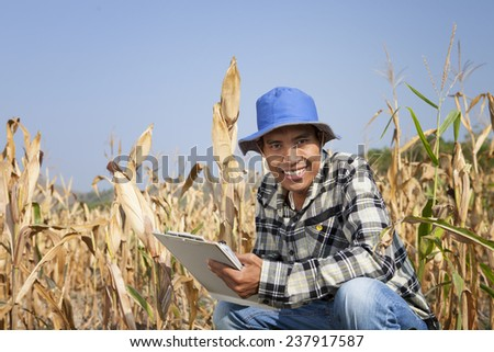 Farmer man holding corn cobs in hands in front of corn plant