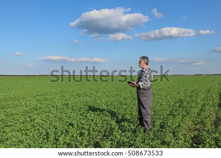 Farmer or agronomist examine clover plant in field, using tablet