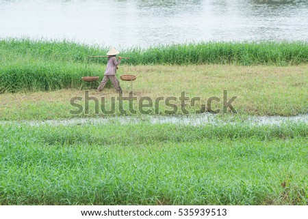 farmer rice agriculture women green grass nature natural culture land work outdoor traditional plantation asia vietnam