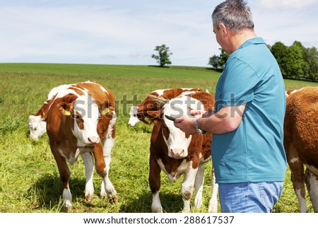 Farmers are using tablet computer at his cows