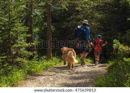 Father, son and their dog walking in a summer forest
