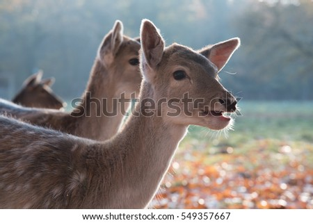 fawn with open mouth