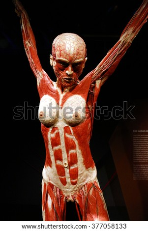 february 17 2015 berlin fully plastinated stock photo 253718194, Muscles