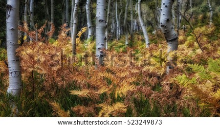 Ferns start to turn brown as winter approaches