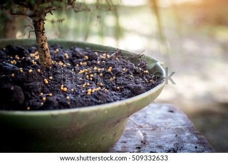 fertilizer on the bonsai pots,AF point selection