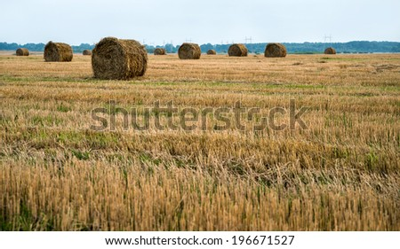 Field after harvesting wheat,  haystack
