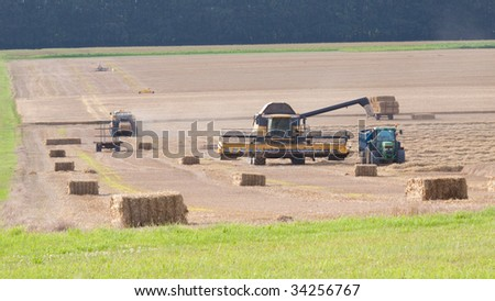 Field of grain being harvested with combine harvester, tractors, bailer, straw bails and trailers