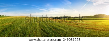 Field of green grass and blue sky. Panoramic shot. Sunny day in the countryside. Summer landscape.