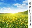 Field of spring flowers,blue sky and sun. - stock photo