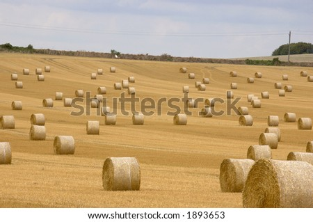 field of straw bales