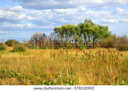 Field of summer grass on a sunny day, Belarus.