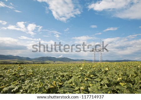 field of sunflowers and sky and mast