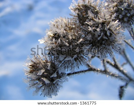 Field plants covered by hoarfrost